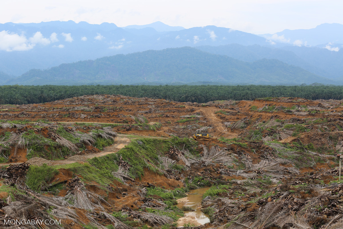 Malaysia calls on Southeast Asia to back palm oil against