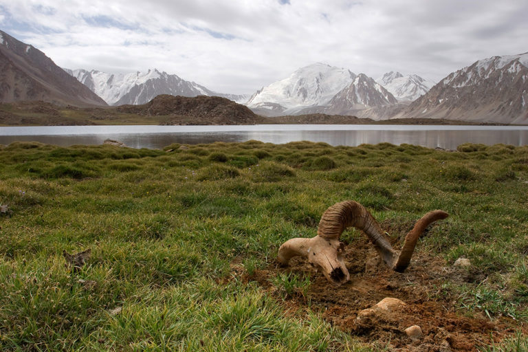 Marco Polo sheep skull embedded in the soil with the Pamir mountains in the background, part of Afghanistan's Wakhan National Park. Photo courtesy of WCS.
