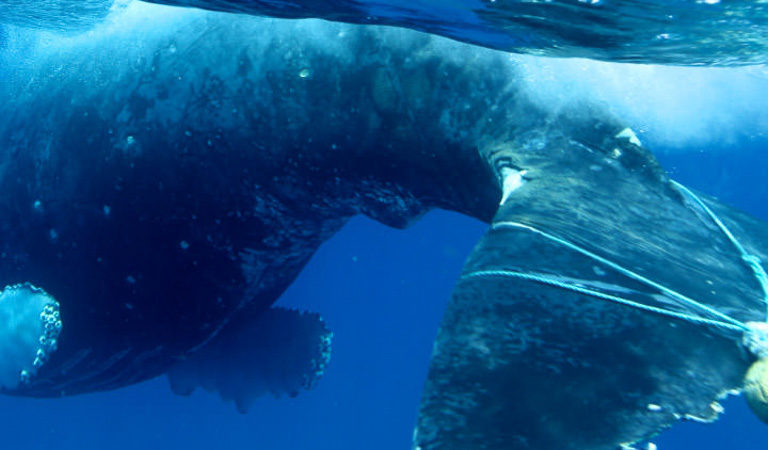 photo of Swelling amount of plastic in the ocean confirmed by new study image