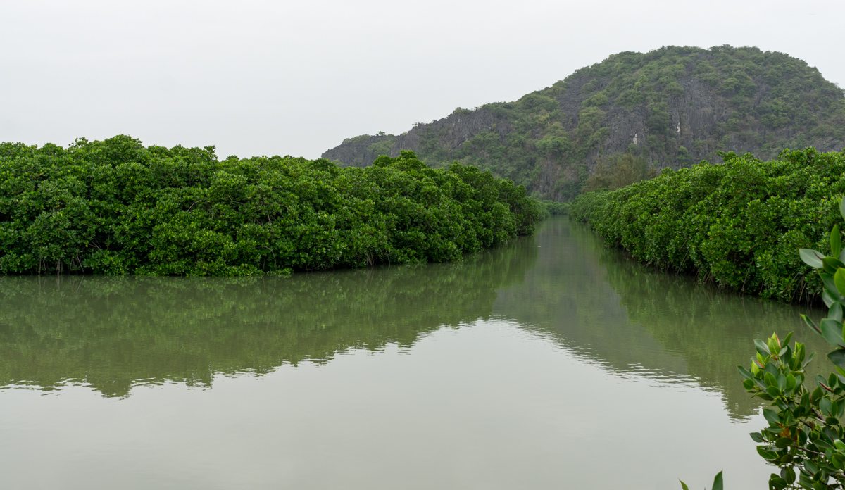 A mangrove forest within aquaculture ponds on Cat Ba's west coast. Photo by Michael Tatarski.