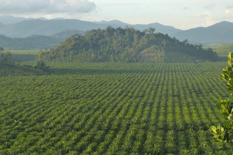 Less rainforest less rain: A cautionary tale from Borneo