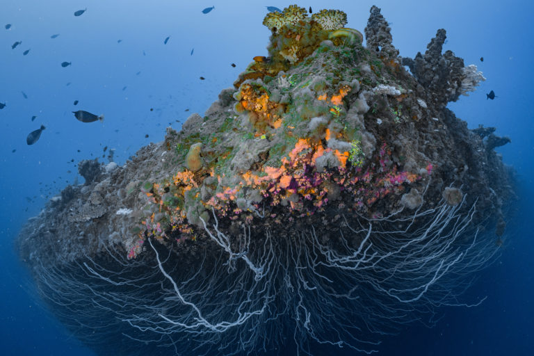 Coral garden on the bow of the Saratoga. Photo by Greg Asner.