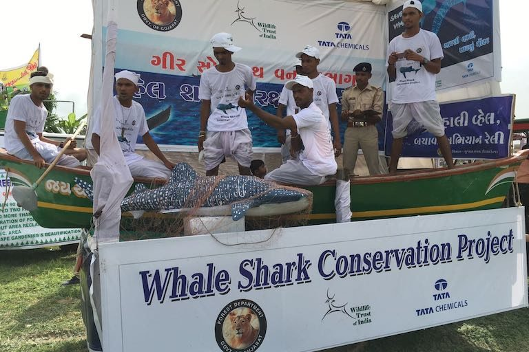 A public demonstration for Gujarat fishers of how to rescue whale sharks accidentally caught in fishing nets. Image courtesy of Wildlife Trust of India.