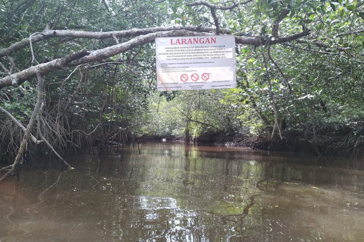 Indonesian Mangrove Protection