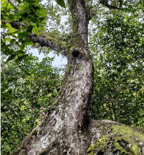To save a forest you have to destroy a nicer one': U S