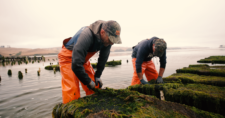 Workers at Hog Island Oyster Farm in Marshall, California. Image by © John Terry courtesy of TNC.