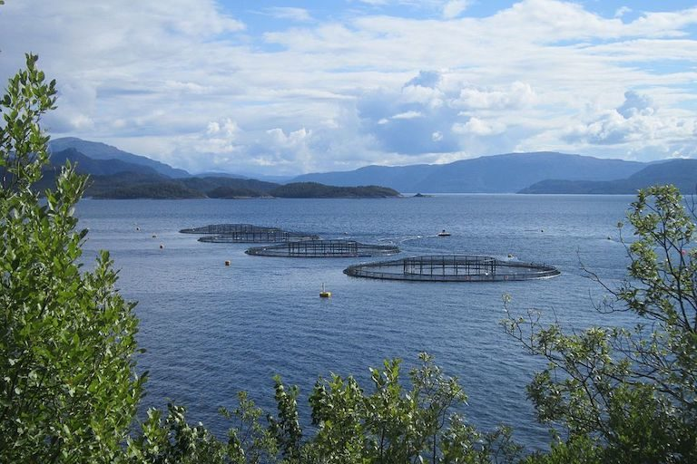 Amid aquaculture boom, report guides investors toward