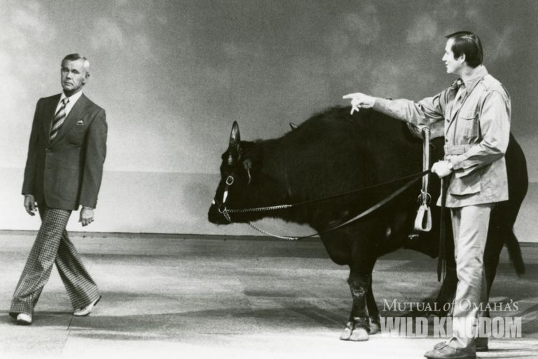 Jim Fowler on the Johnny Carson show. Courtesy of Mutual of Omaha's Wild Kingdom.