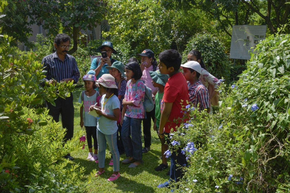 Butterfly-garden-naturalist