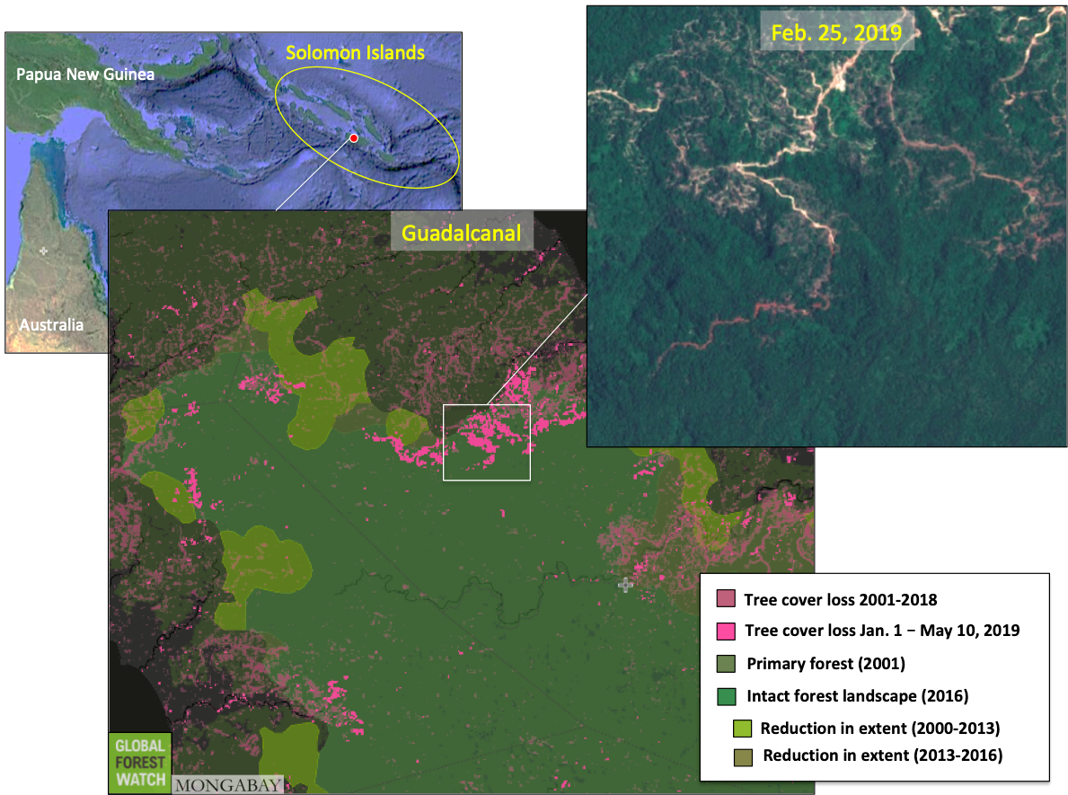 Asia Times | Logging ravaging the Solomon Islands' forests
