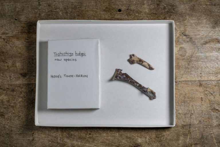 Volunteers find bones of new species of extinct heron at Florida fossil site