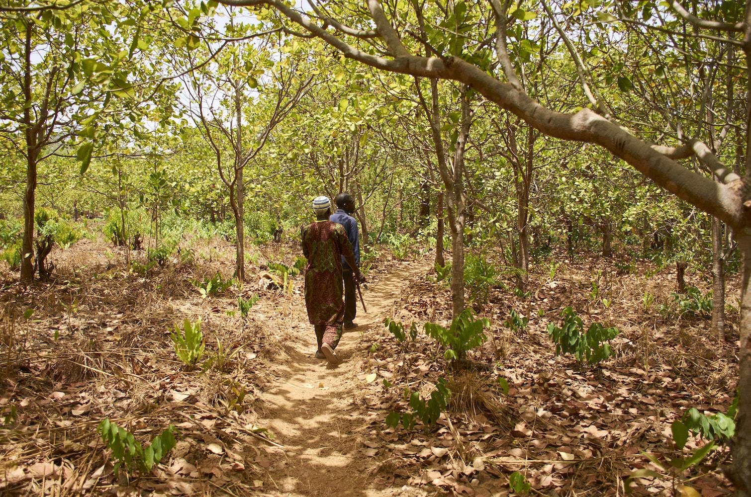 Bauxite mining and Chinese dam push Guinea's chimpanzees to