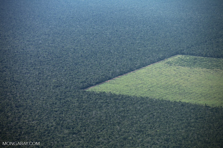 New report examines drivers of rising Amazon deforestation on