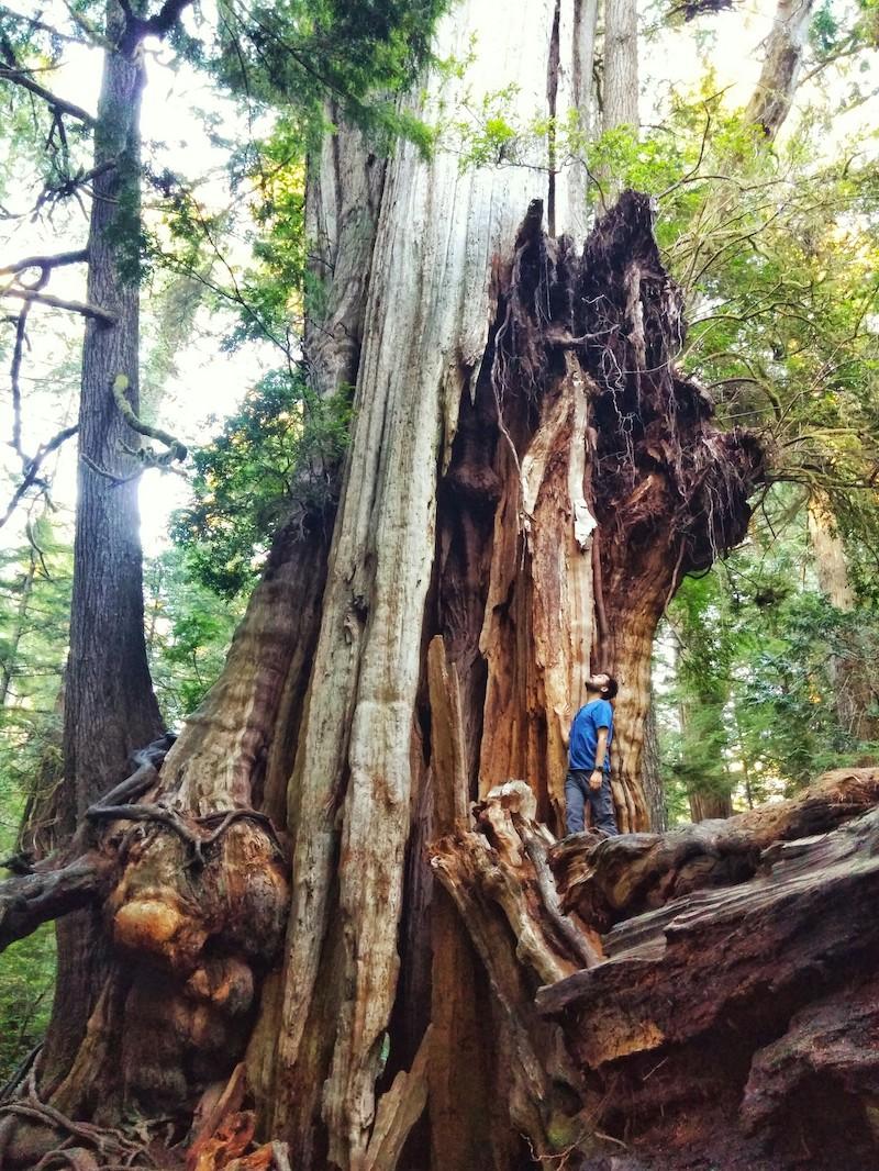 logging Archives - Oregon Stream Protection Coalition