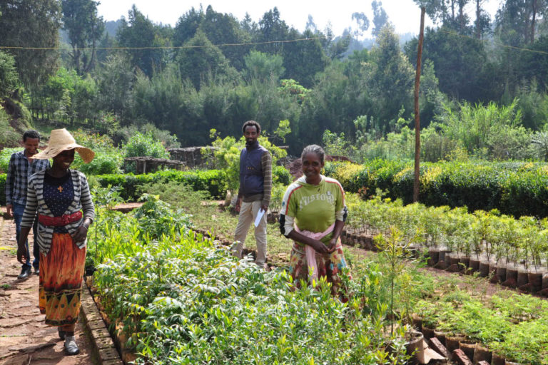 Employees are seen at the nursing site in Gullele Botanical Garden in Addis Ababa, Ethiopia. Photo courtesy Gullele Botanical Garden.