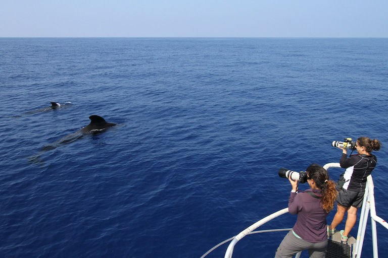 Amy Van Cise, left, and colleague Annie Gorgone of the National Oceanographic and Atmospheric Administration photograph short-finned pilot whales in Hawaii. Image by Robin Baird, Cascadia Research Collective.