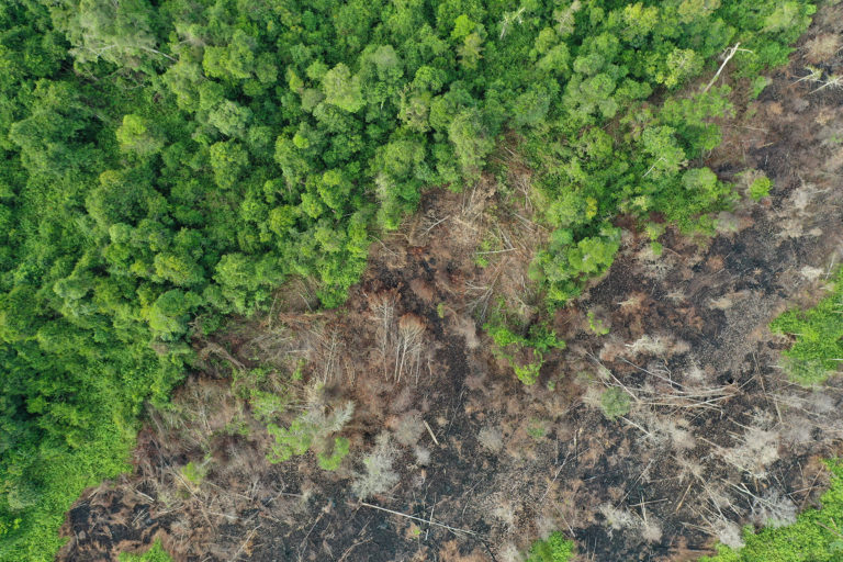 Peat forest clearing in Indonesian Borneo in June 2019. Photo by Rhett A. Butler