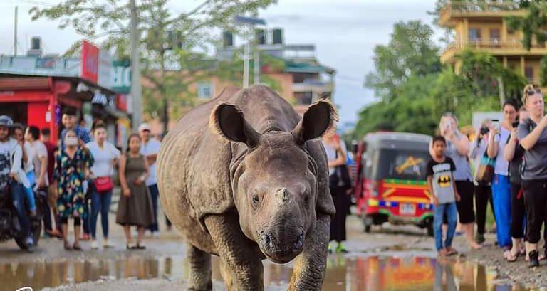 Conservation news on Rhinos
