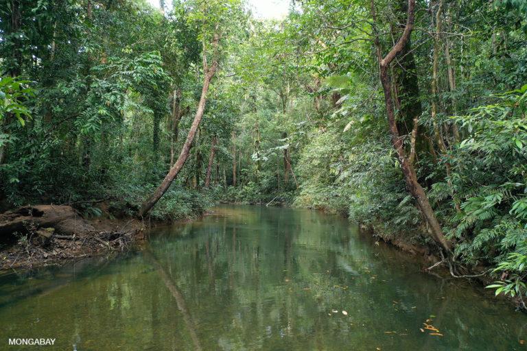 Rainforest in Indonesian Borneo. Image by Rhett A. Butler/Mongabay.