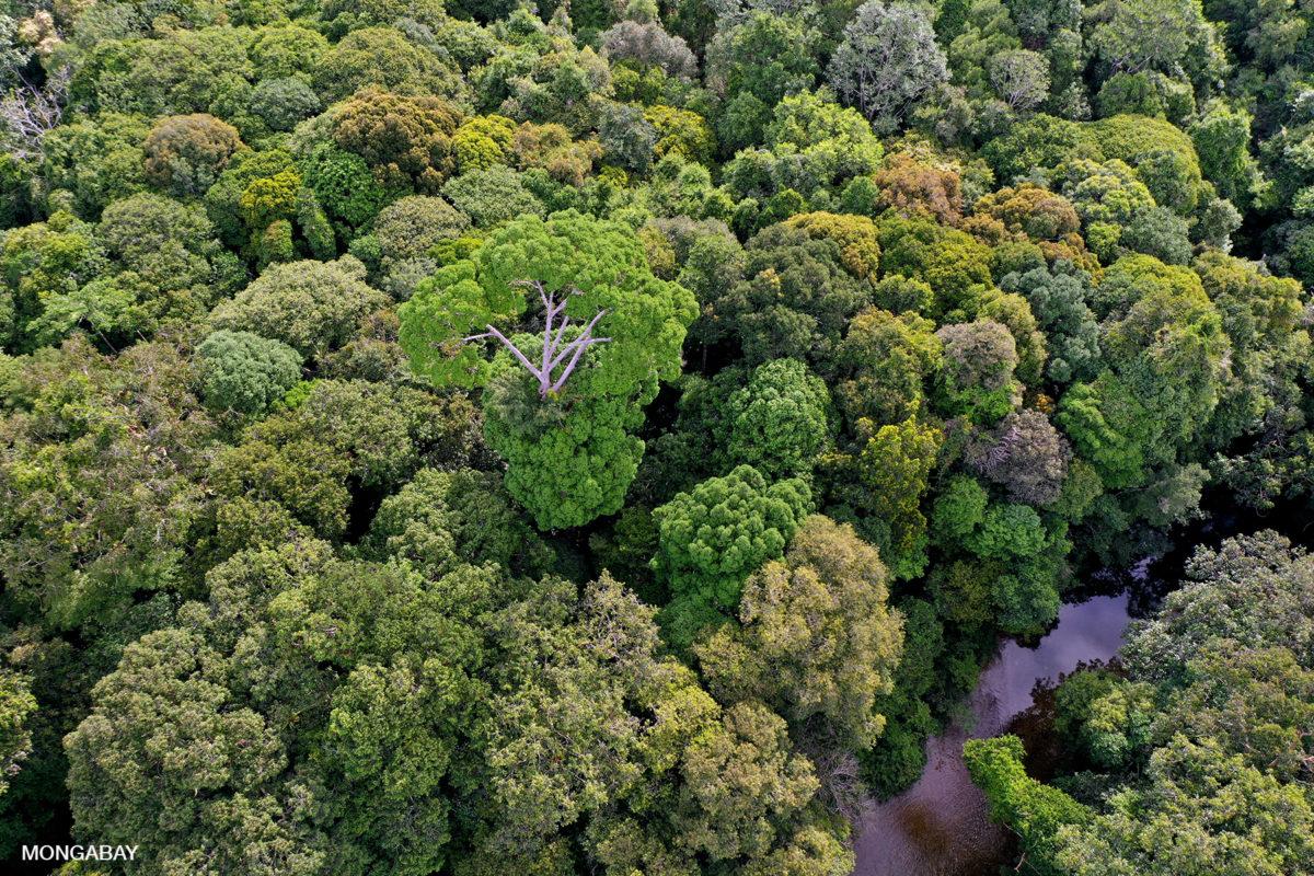 Lowland rainforest in Indonesian Borneo. Photo by Rhett A. Butler.