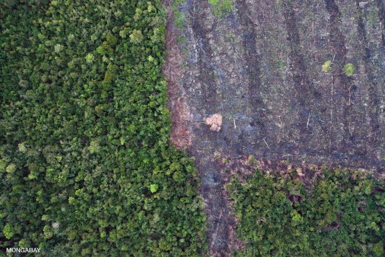 Deforestation near Mempawah. Photo by Rhett A. Butler.