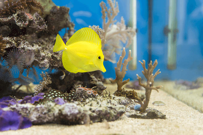 How To Make Sure Your Aquarium Fish Are Ethical Commentary