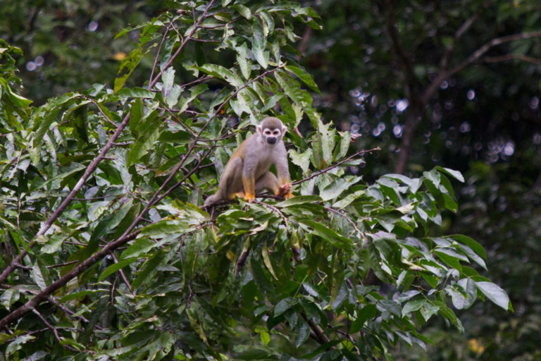 France contributes to protection of Amazon stronghold, Yasuní National Park