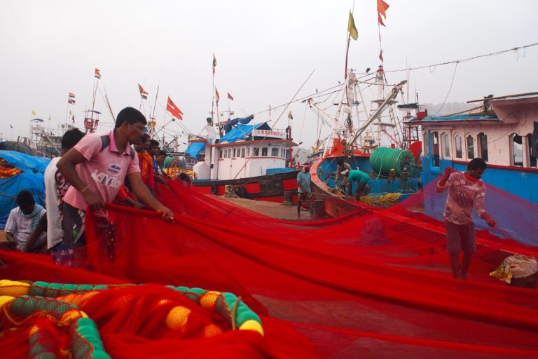 Fishers roll out a red purse-seine net in Mangalore, a major fishing harbor in southwest India. Some of the country's coastal states are beginning to regulate purse seine fishing boats, especially the size of the net mesh to ensure juvenile fish don't get caught. Image by Vaishnavi Chandrashekhar.