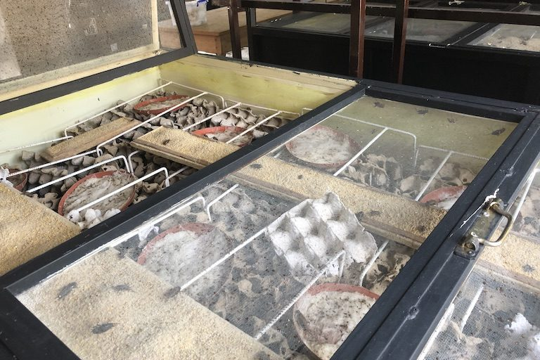 """A cricket cage in Valala Farms. The Antananarivo-based group produces cricket powder as a """"green"""" source of protein and nutrients. Image by Emilie Filou for Mongabay."""