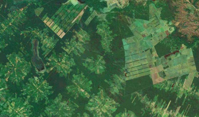 Experts deny alleged manipulation of Amazon satellite deforestation data