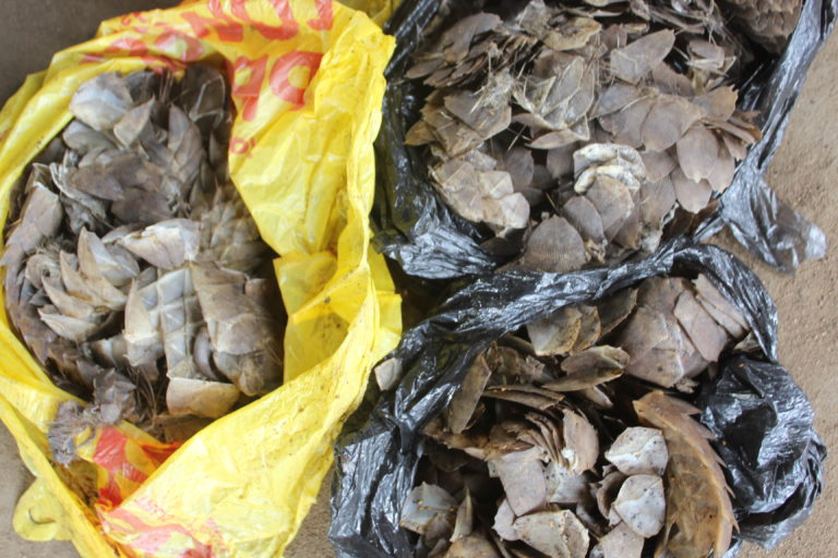 Pangolin scales in bags. Photo: Orji Sunday