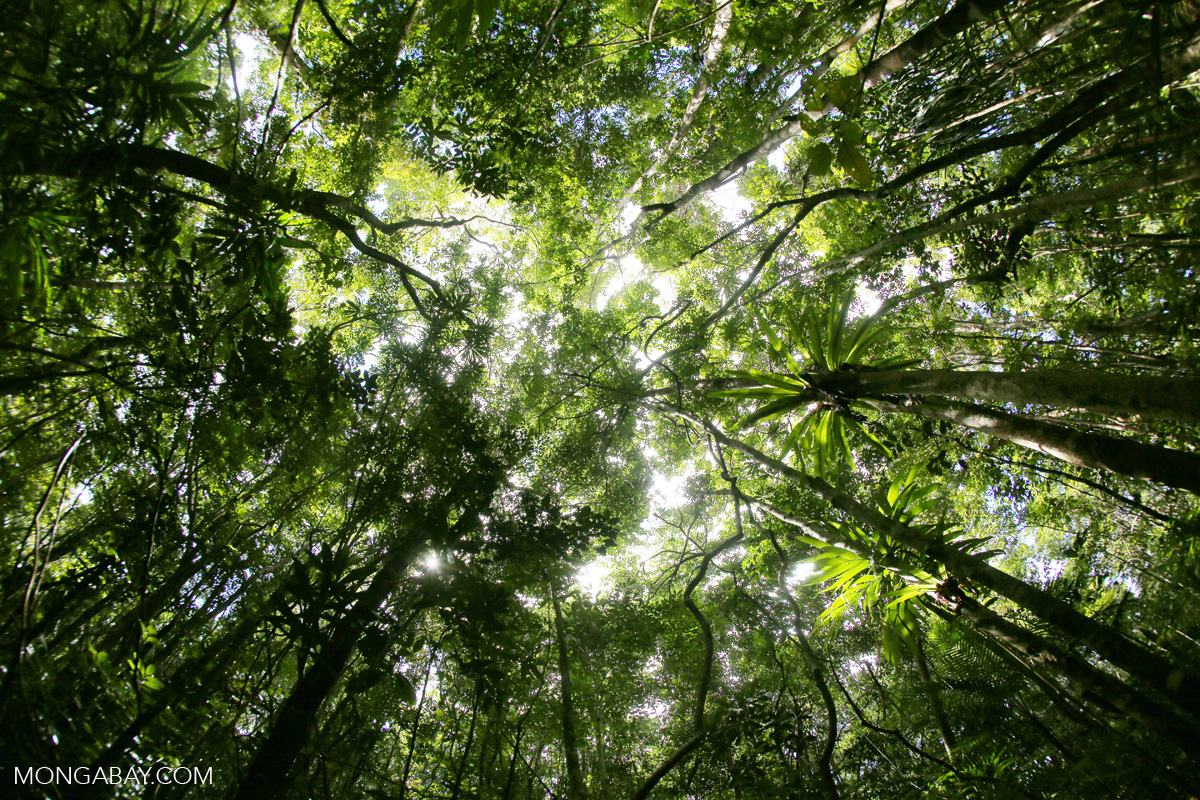 Rainforest at Tampolo on the Masoala Peninsula, Madagascar. Image by Rhett A. Butler.