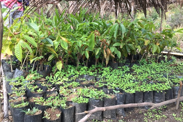 Native plants at a private nursery in a village near Ranomafana National Park, Madagascar. Image by Malavika Vyawahare.