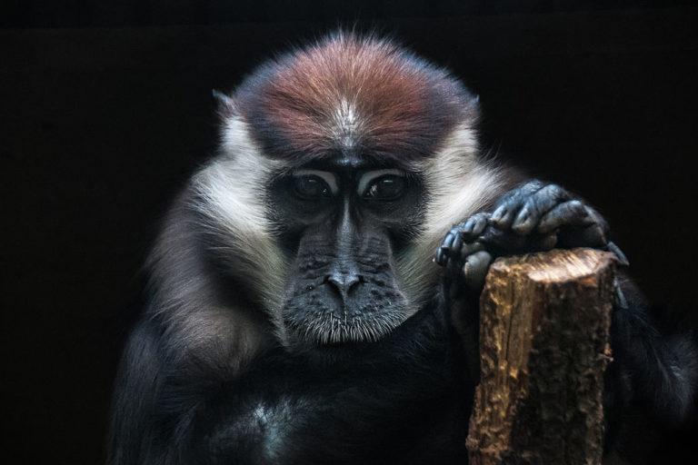 From over 100 000 species assessments in IUCN update zero improvements