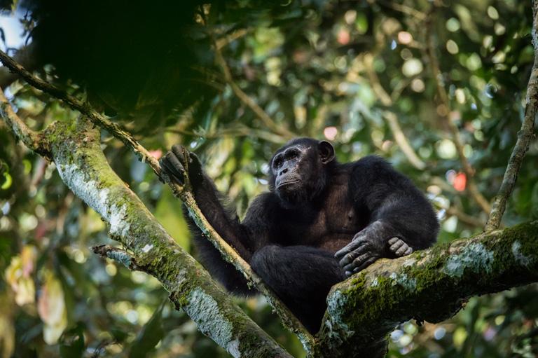 Congo government opens Nouabalé-Ndoki National Park to oil exploration
