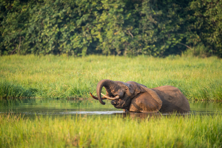 Congo government opens Nouabalé-Ndoki National Park to oil