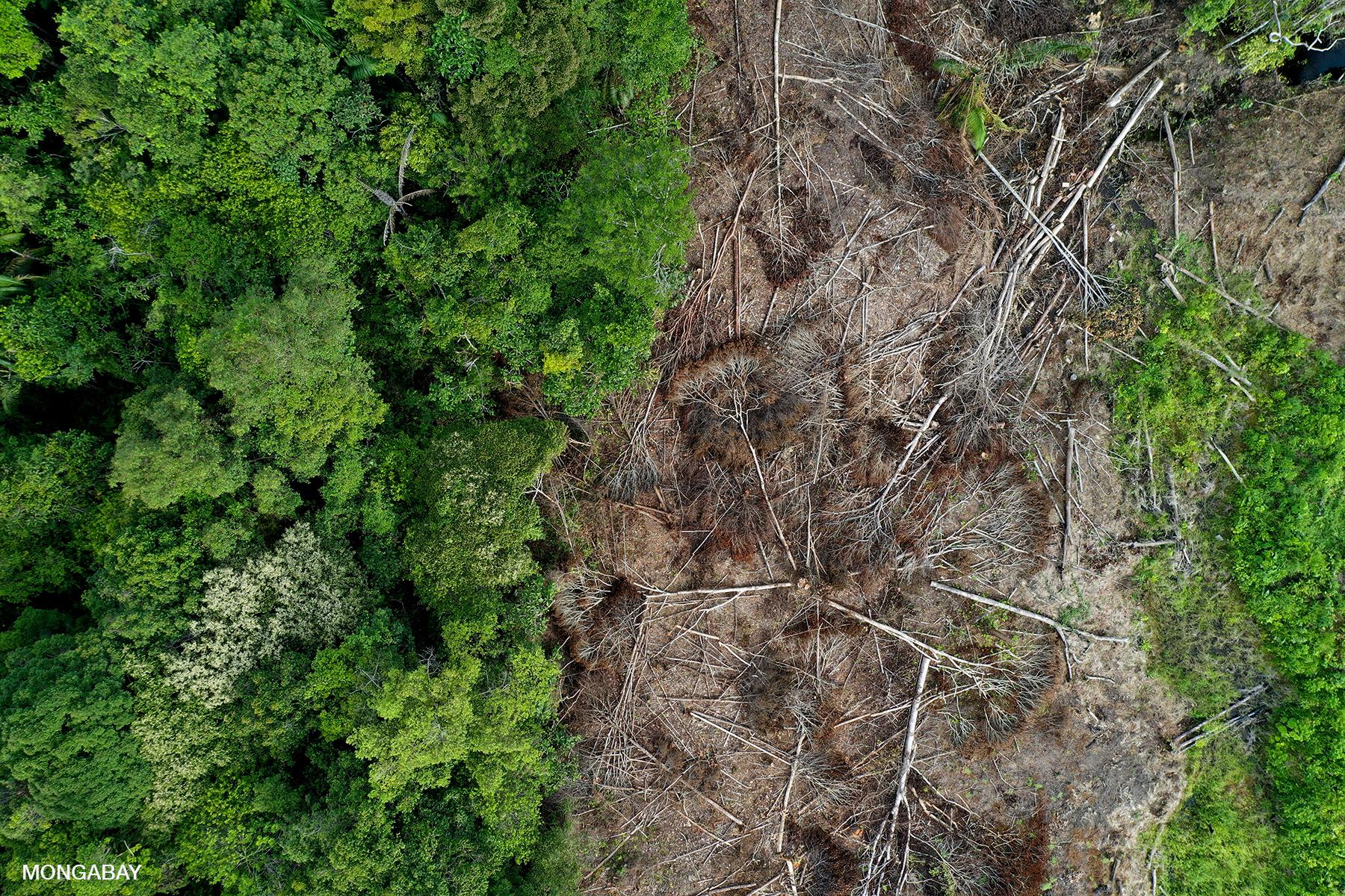 Deforestation in Kapuas Hulu, Indonesian Borneo. Photo by Rhett A. Butler.