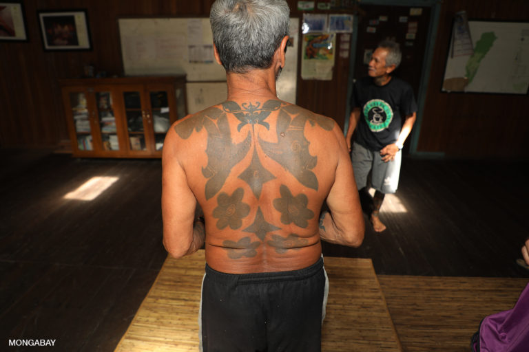 Traditional Iban tattoos on a Dayak leader's back. Photo by Rhett A. Butler.