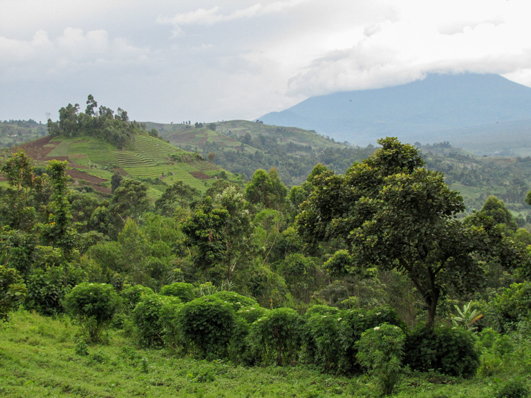 Forest and terraced hillsides in eastern Democratic Republic of Congo. Image by John C. Cannon/Mongabay.