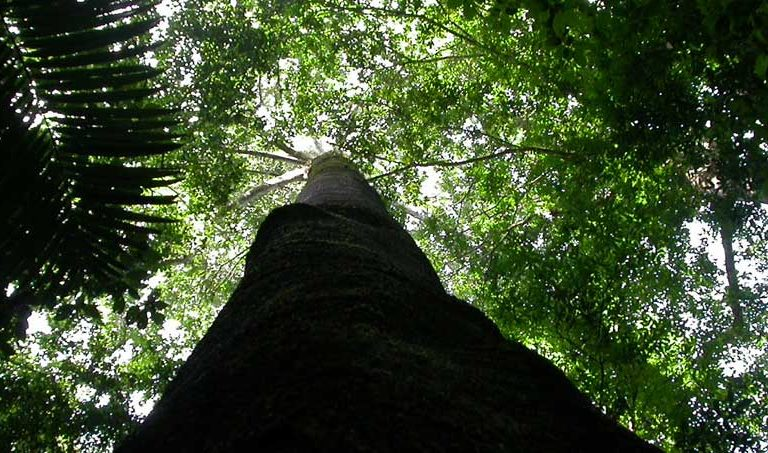 Deforestation, climate crisis could crash Amazon tree diversity: study
