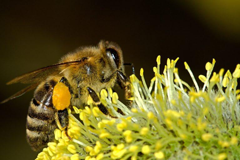 Half a billion bees dead as Brazil approves hundreds more pesticides