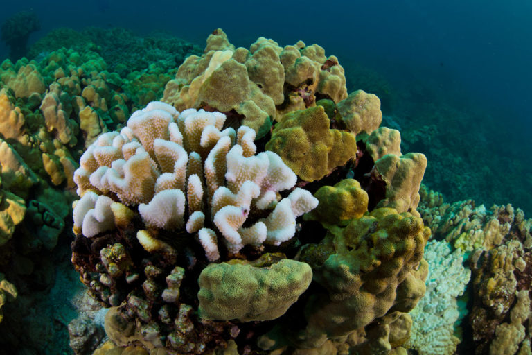 Hawaii braces for potential mass-coral bleaching event