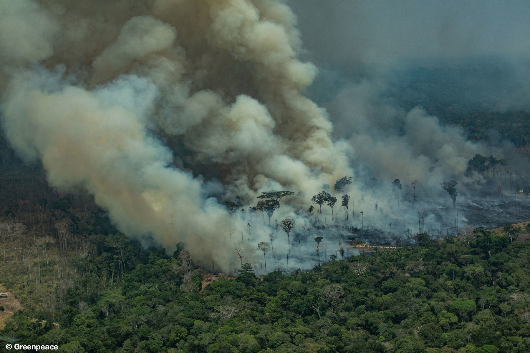 CANDEIRAS DO JAMARI, RONDÔNIA, BRAZIL: Aerial view of a large burned area in the city of Candeiras do Jamari in the state of Rondônia. (Photo: Victor Moriyama / Greenpeace)