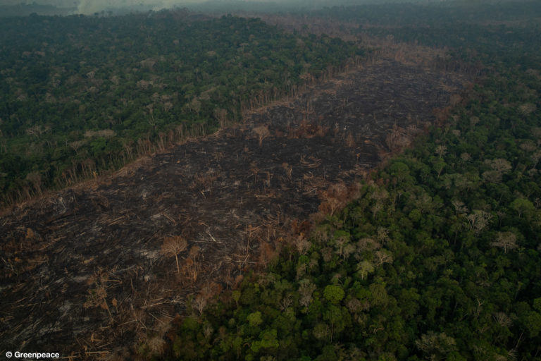 PORTO VELHO, RONDÔNIA, BRAZIL. Aerial view of burned areas in the Amazon rainforest, in the city of Porto Velho, Rondônia state. (Photo: Victor Moriyama / Greenpeace)
