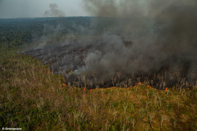 Greenpeace releases dramatic photos of Amazon fires