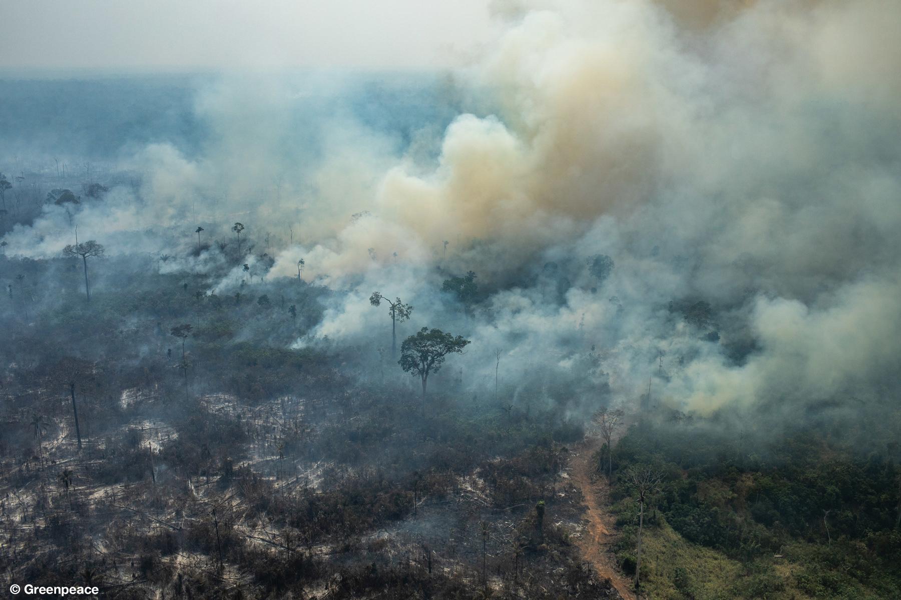 COLNIZA, MATO GROSSO, BRAZIL. Aerial view of burned areas in the Amazon rainforest, in the city of Colniza, Mato Grosso state. (Photo: Victor Moriyama / Greenpeace)