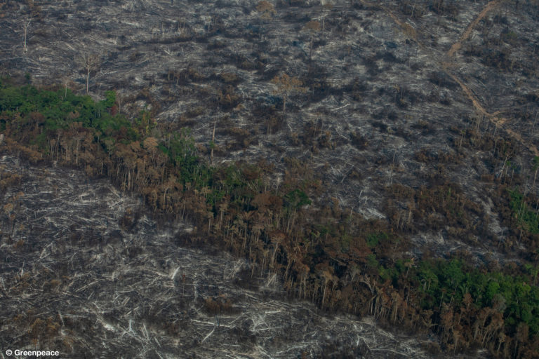 NOVA BANDEIRANTES, MATO GROSSO, BRAZIL. Aerial view of burned areas in the Amazon rainforest, in the city of Nova Bandeirantes, Mato Grosso state. (Photo: Victor Moriyama / Greenpeace)