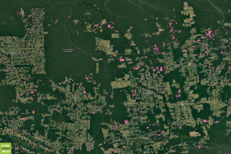 Global Forest Watch map showing tree cover loss over the past year in the Nova Bandeirantes, Mato Grosso area.