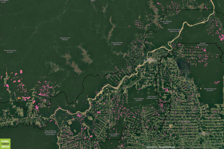 Global Forest Watch map showing tree cover loss over the past year in the Porto Velho, Rondônia area.