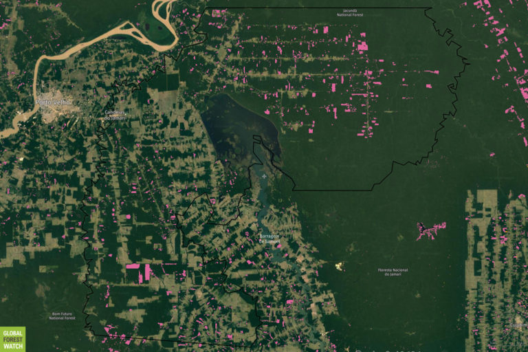 Global Forest Watch map showing tree cover loss over the past year in the Candeiras Do Jamari, Rondônia area.